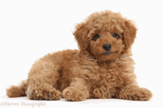 POODLE Bug breaks SSL 3.0 Security